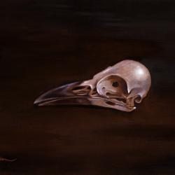 "Benjamin Vierling ""Corvidae Skull"""