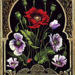 "Benjamin Vierling ""Papaver Somniferum"""